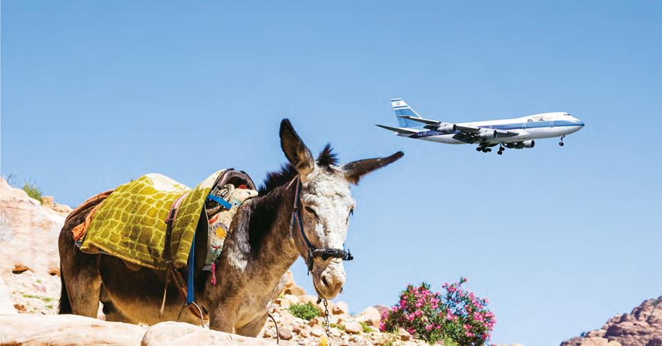donkey-plane